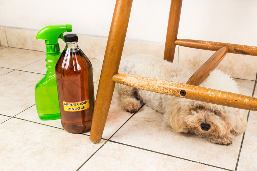 Apple cider vinegar discourage dogs and cats from chewing on furniture