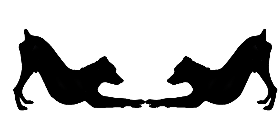 Mirror image of silhouette of black dog on white background.