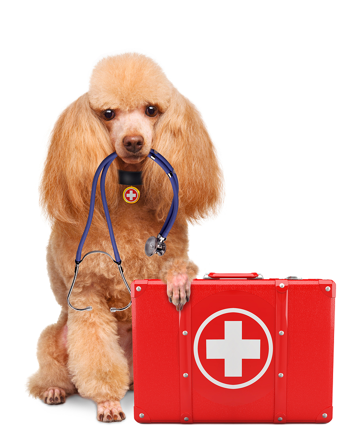 Dog with a first aid kit. Isolated on white.